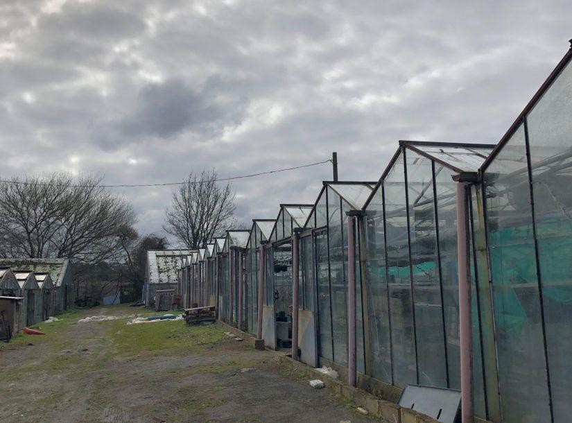 Former Harringtons Nursery, Swanley